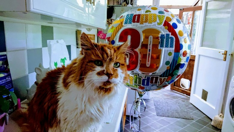 World's Oldest Living Cat Blows His 30th Birthday Candle