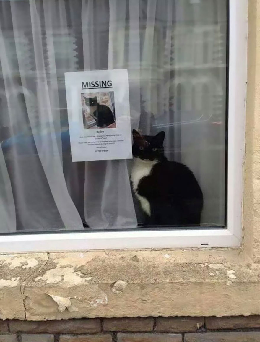 Missing Cat Found Beside His Own 'Missing Cat' Poster
