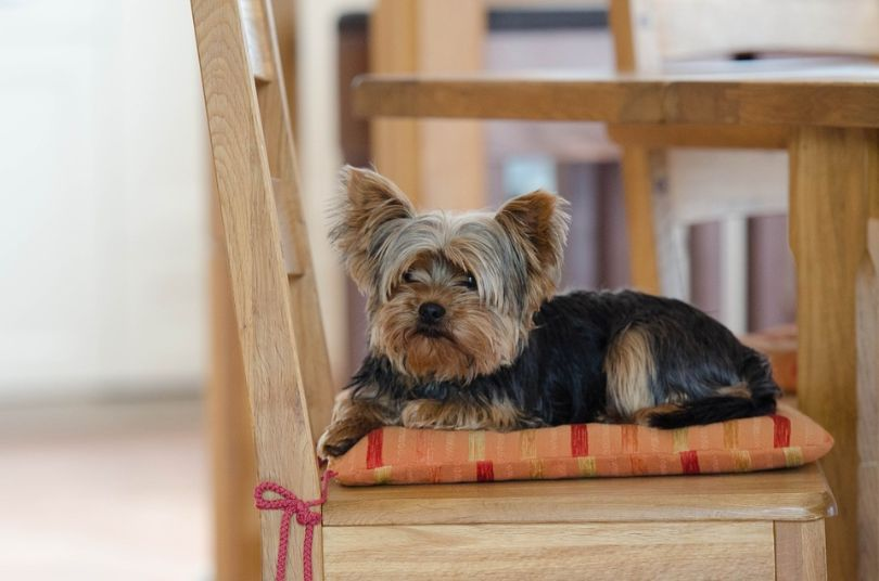 Most Popular Small Dog Breeds That Will Beautify Your Apartment