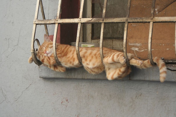 20+ Photos of Cats Sleeping Prove That The Perfect Place For Them to Sleep is Everywhere