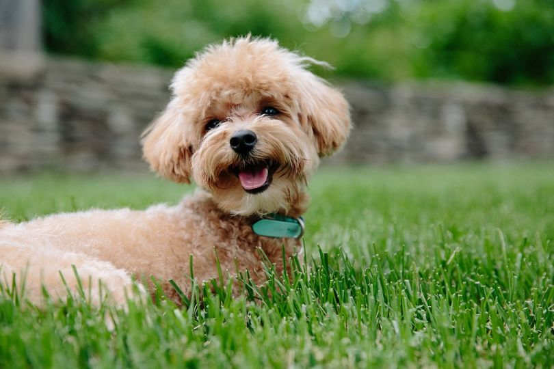 Top 10 Smartest Dog Breeds to Play Games With