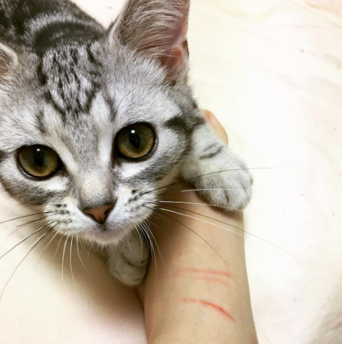 15 Amazing Facts About Cats Every Feline Lover Will Find True