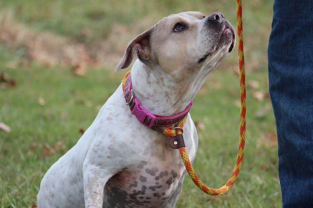 Deaf Dog Has Been Waiting 3 Years in the Shelter for Someone to Notice Her
