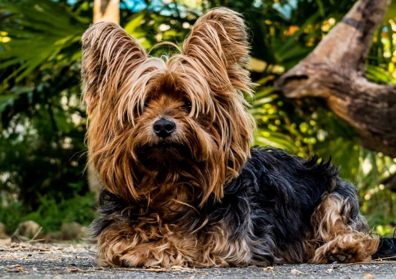 All Types of Dogs – Complete List to Help You Find the Perfect Pet