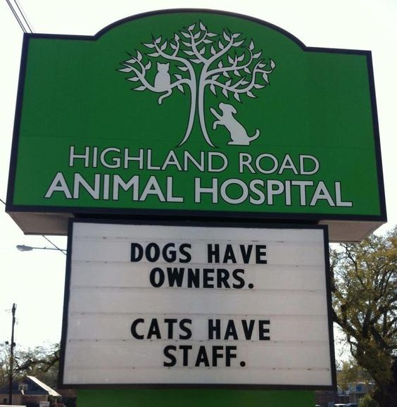 15+ Genius Vet Signs for Pets Afraid of Going to the Vet