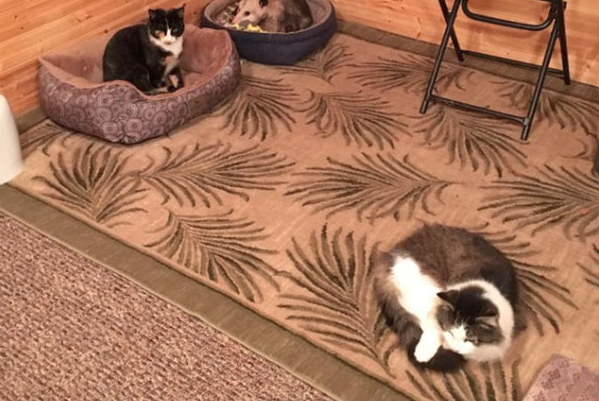 Grandma Thought She's Been Taking Care of Three Cats - But One of Them Isn't Actually a Cat