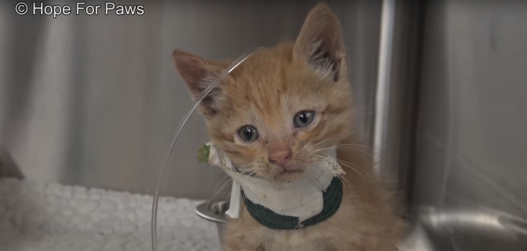 Rescuers Had to Break Walls to Save Kitten Who Was Trapped In Chimney For 3 Days