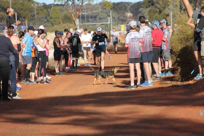 Stray Dog Gets Awarded after Completing a Marathon Alongside Humans
