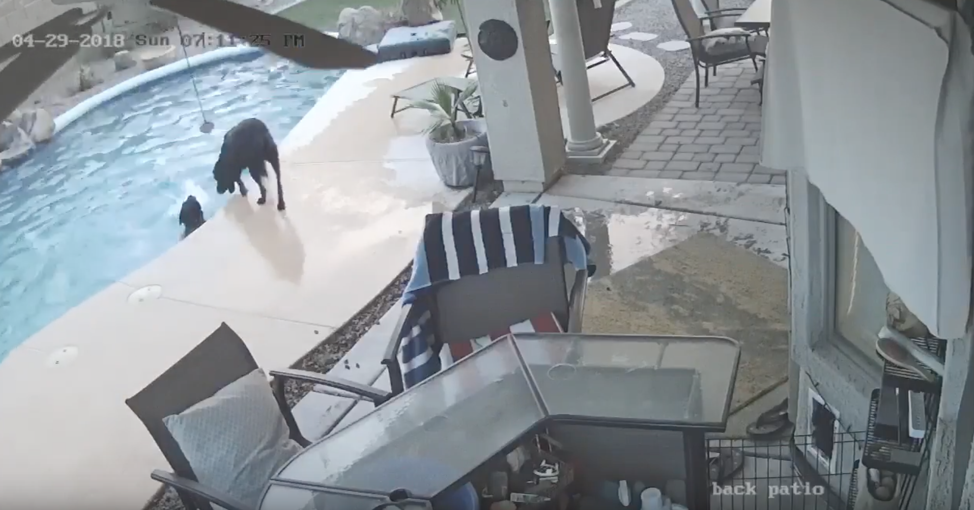 This Dog Deserves a Best Best Friend of the Year Award After Saving His Drowning Best Friend