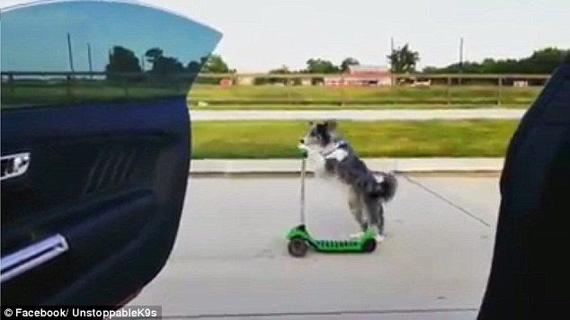 This Dog Takes the #InMyFeelings Dance Challenge with Her Impressive Stunt While Riding Her Scooter