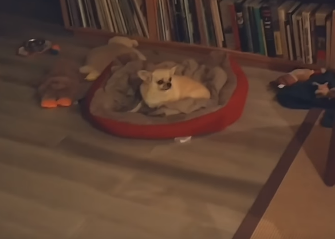 WATCH: Tiny Dog Couldn't Contain Happiness Upon Seeing Dad Who Has Been Away For 2 Months