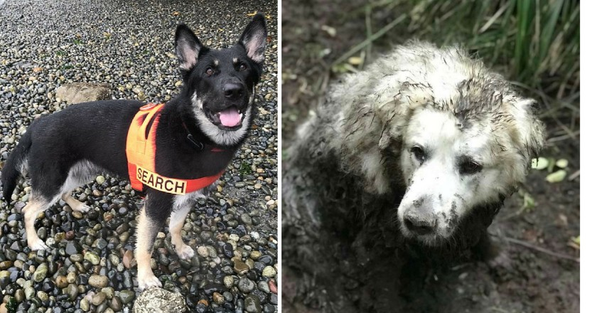 This Dog Rescues Another Missing Pet Who'd Been Stuck in a Mud Pit for Two Days