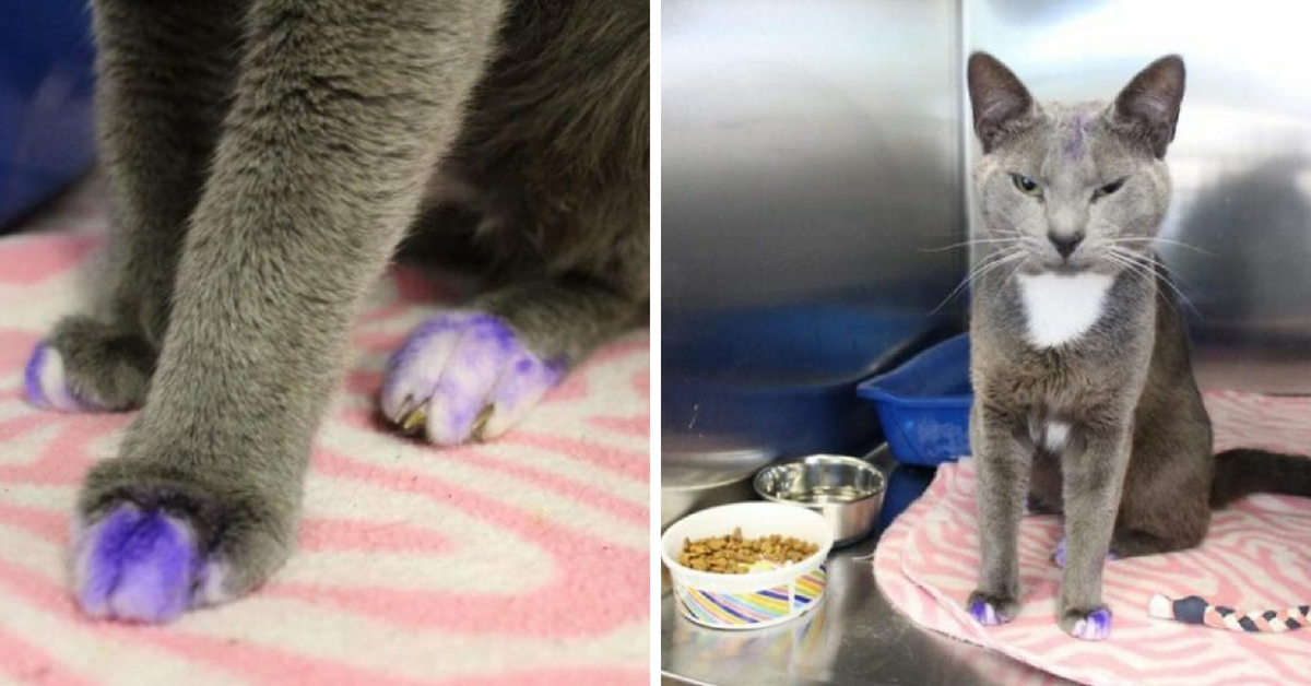 Cat with Paws Dyed Purple Allegedly Used in Illegal Dog Fighting