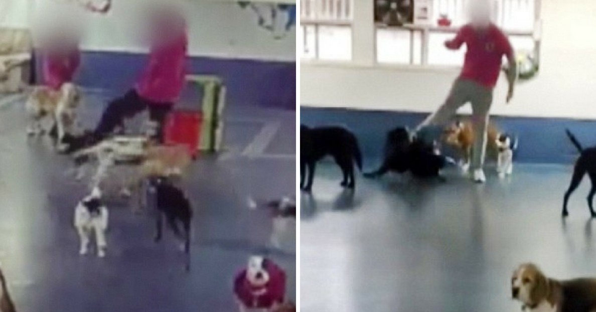 Caught on Camera: Staff Violently Kicking Dogs at Doggo Daycare