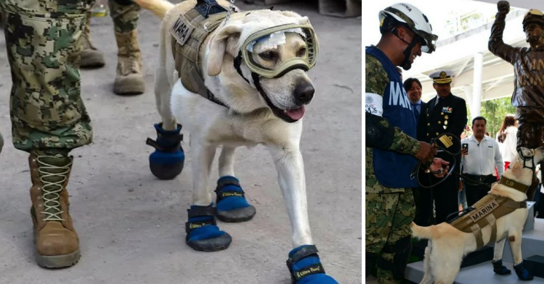 Frida the Hero Dog Gets Her Own Statue for Saving 12 Lives from an Earthquake in Mexico