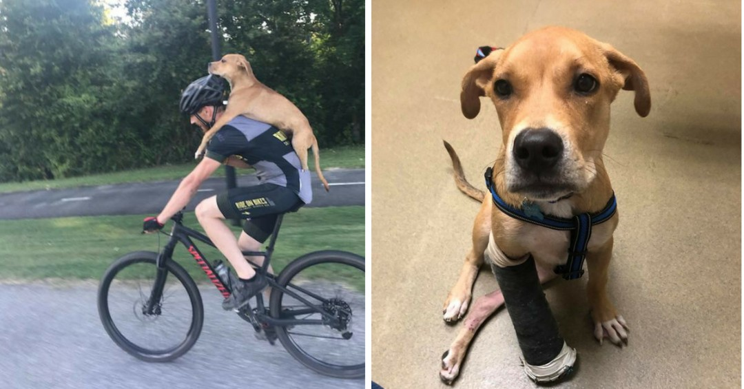 Cyclist Jarrett Little Saves Stray Dog with a Broken Leg by Giving Him a Ride into Town