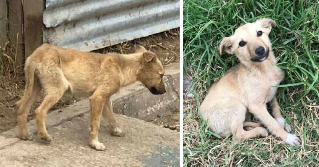Man Rescues a Stray Puppy Who Instantly Won His Heart in Guatemala (1)