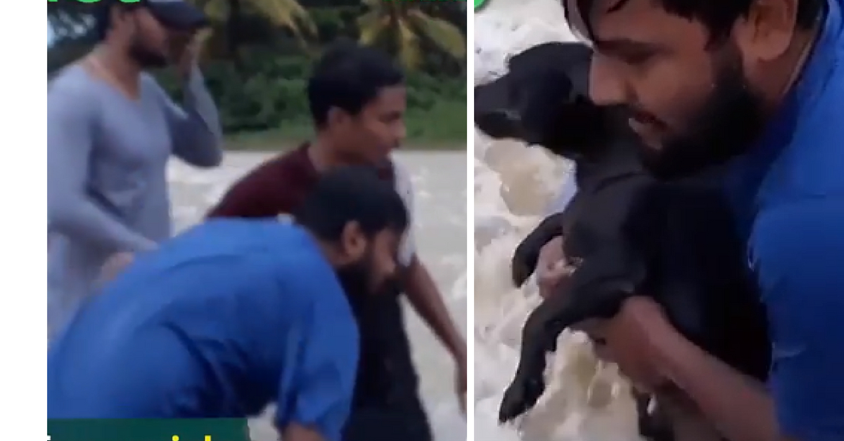 People Formed a Human Chain to Save A Dog From Flash Flood