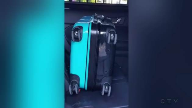 Man Discovers Suitcase In The Bushes, It Contains the Last Thing an Animal Lover Would Want To See