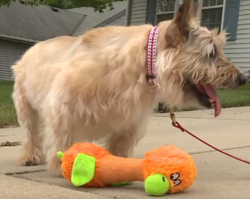 WATCH: Dog Mourns His Old Owner's Death in the Most Heartbreaking Way