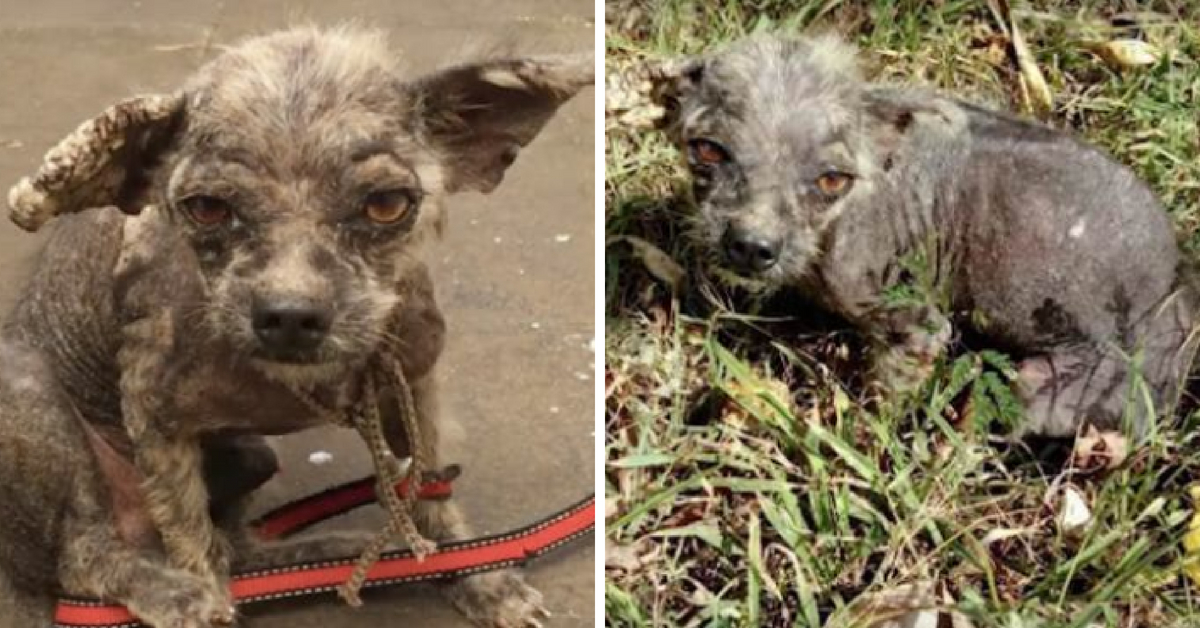 Sick Pooch Survives as His Rescuer Took Charge After Vet Refused to Treat Him (2)