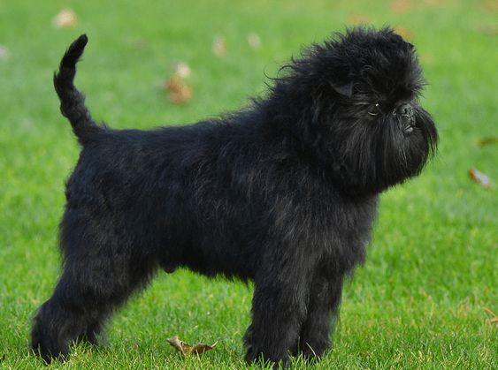Teacup Breeds That Don't Shed and Make Ideal Pets