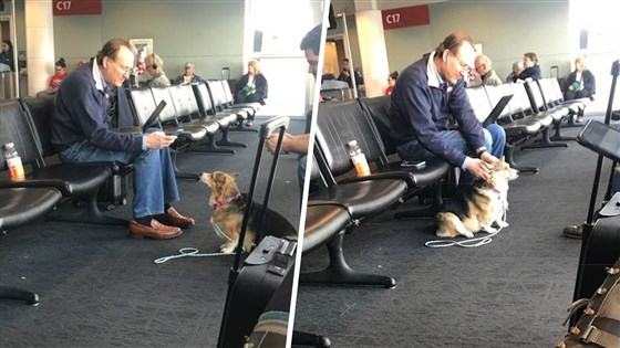This Support Dog Helps and Comforts Owner's Panic Attacks in the Airport