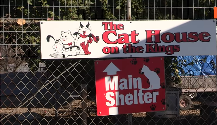 76-year Old Woman Gives up Home for Over 1000 Rescued Cats
