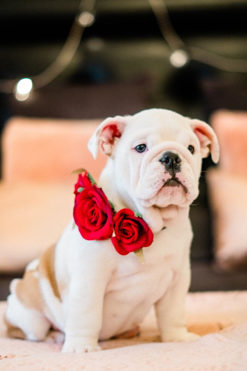 Cute Dog Pictures – 5-Minute Guide How to Take Incredible Photos