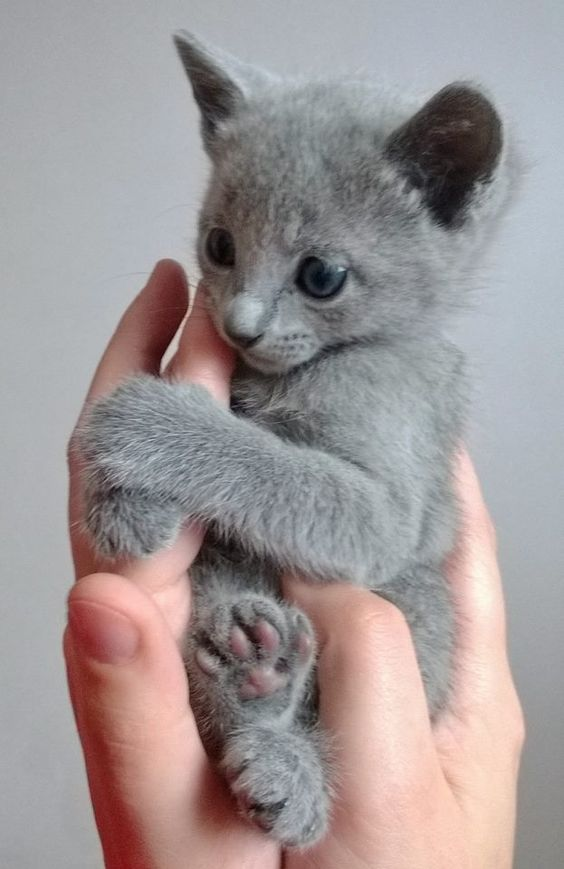 Top 20 Cute Baby Cats Pictures That Will Melt Your Heart Ritely