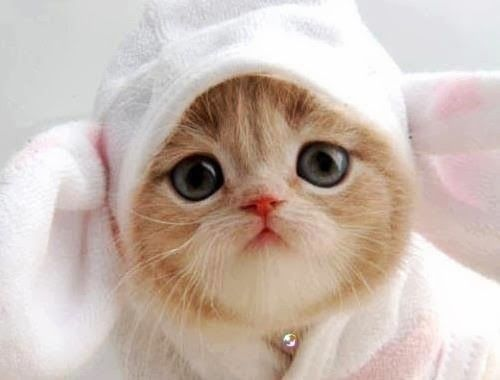 Top 20 Cute Baby Cats Pictures That Will Melt Your Heart
