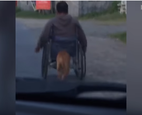 Touching Moment Shows Pet Dog Pushes Paralyzed Owner's Wheelchair Along Road