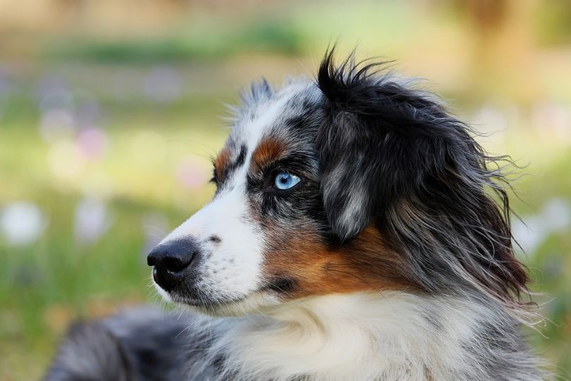 Top 10 Dog Breeds That Live Longest – Find Your Companion for Life