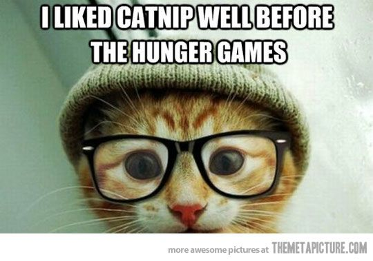 Cat Memes – From Simple Picture to Internet Stardom
