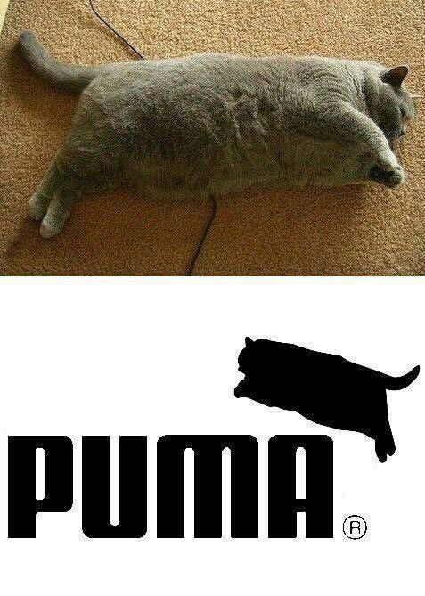 15 Pictures of Cute Fat Cats to Forget Your Extra Pounds