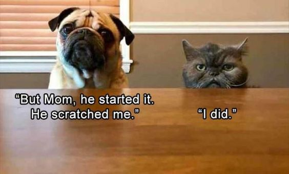 17 Hilarious Cat Pictures to Brighten Any Bad Day
