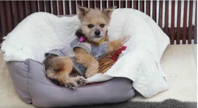 Sick Pooch Survives as His Rescuer Took Charge After Vet Refused to Treat Him