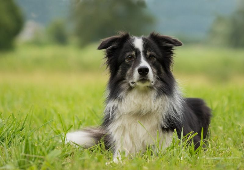 Top 10 Most Popular Large Dog Breeds You Will Want to Own