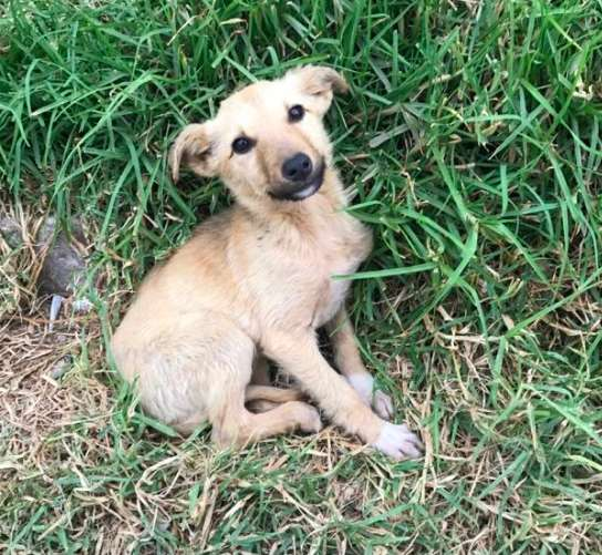 Man Rescues a Stray Puppy Who Instantly Won His Heart in Guatemala