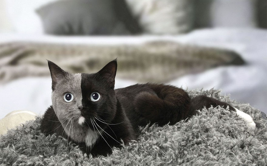 This Kitten Was Born With 'Two Faces', But It Grew Up To Be The Most Beautiful Cat Ever
