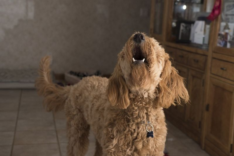 Why Do Dogs Bark? Causes and Understanding the Meaning of Barks