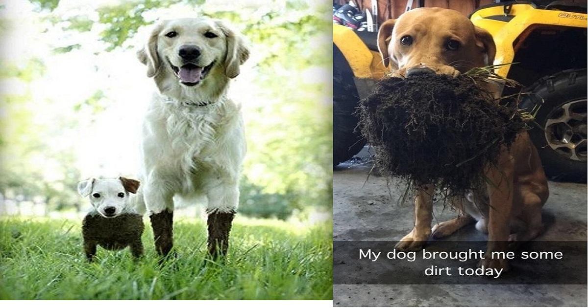 dog eating dirt