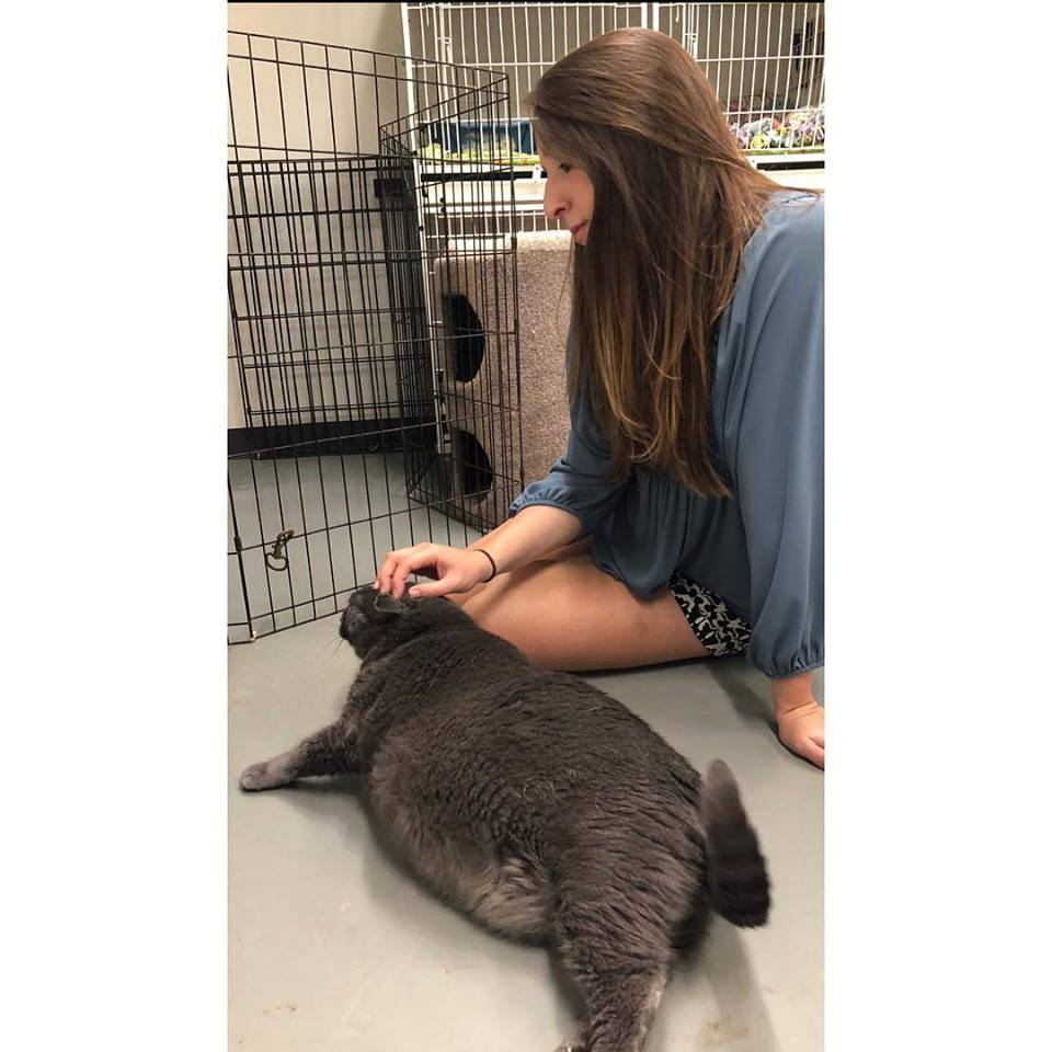 UPDATE: The World's Most High-Maintenance Cat Got Adopted By An Owner Just As Extra As He Is