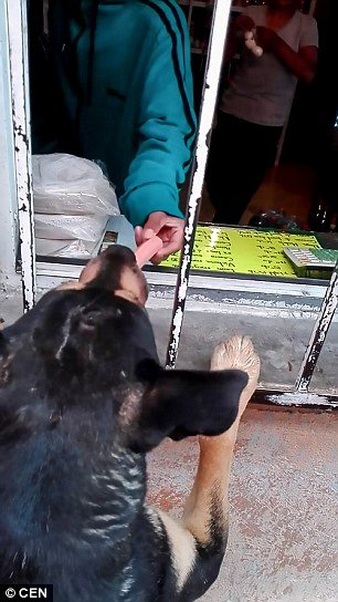 WATCH: Clever Stray Dog Begs for Money and Buys Himself a Sausage