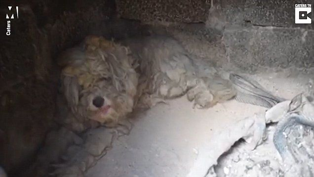 Dog Was Found Hiding in This Spot for Two Days Just to Survive Wildfires Raging through Greece