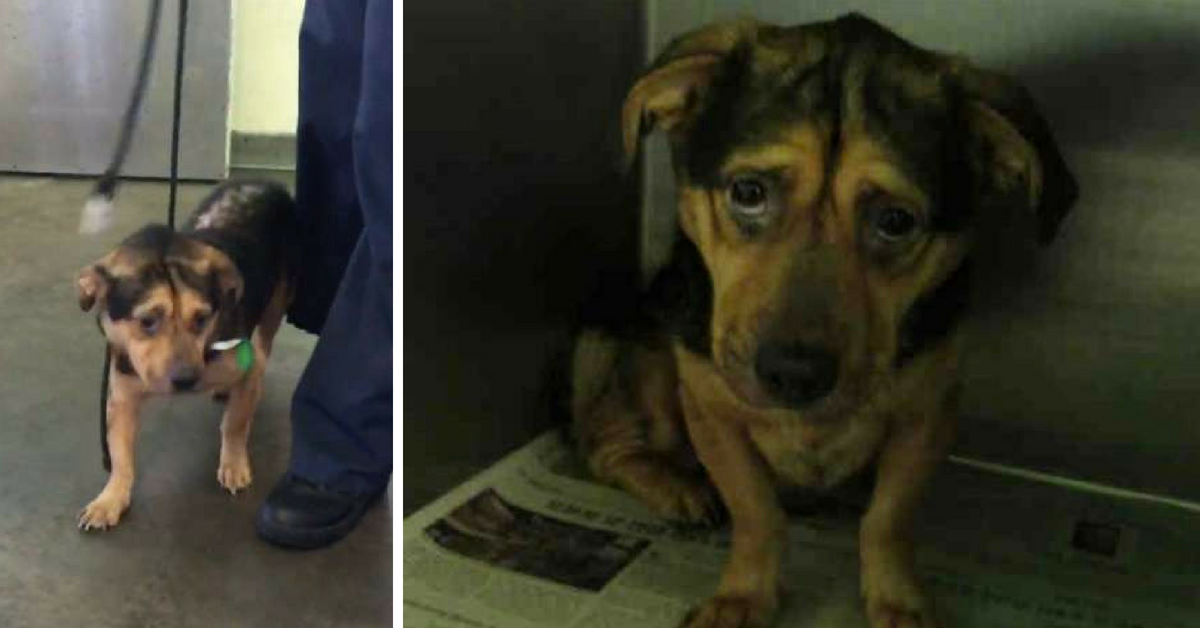 Couple Drove 6 Hours To Make the Saddest Dog In the Shelter Finally Smile