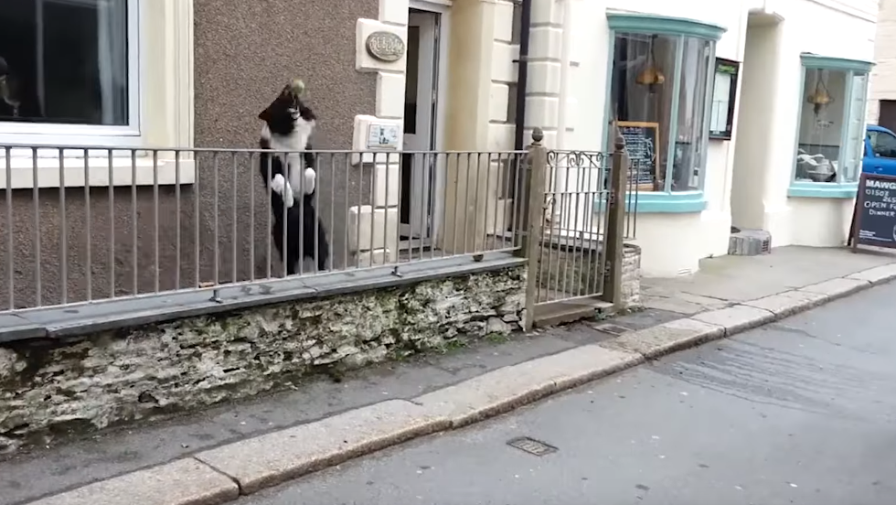 WATCH: This Smart and Fun Dog Likes Playing Catch with Strangers in the Street