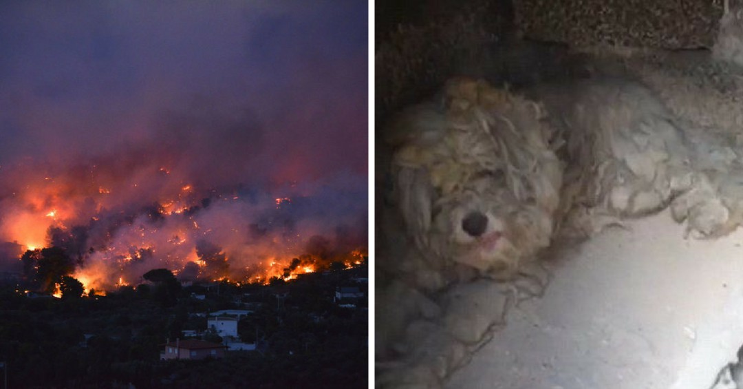 Dog Was Found Hiding inside Oven for Two Days to Survive Wildfires Raging through Greece