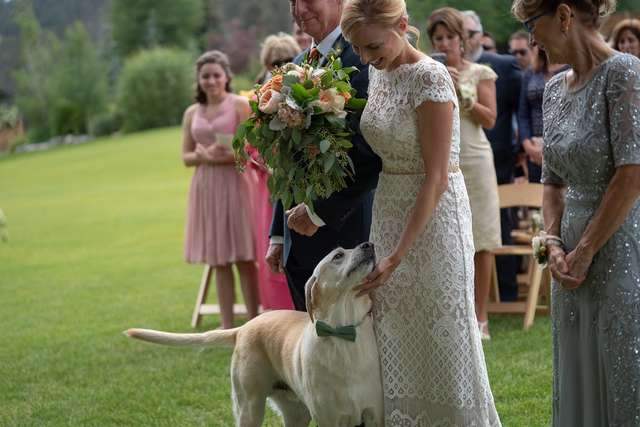 Adorable Photos of a Labrador Photobombing His Owner's Wedding Day Will Make Your Day