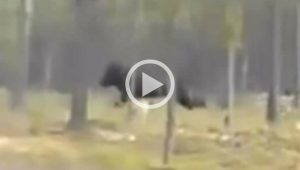 WATCH: Chilling Video Shows Mysterious 7ft. Beast Attacking a Dog in North America